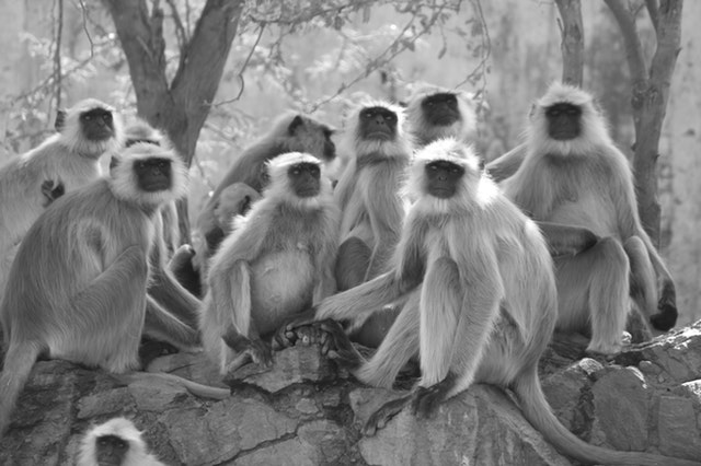 Picture of monkeys